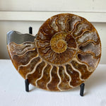 Load image into Gallery viewer, Polished Ammonite Fossil Pair with Ammolite on Metal Stands