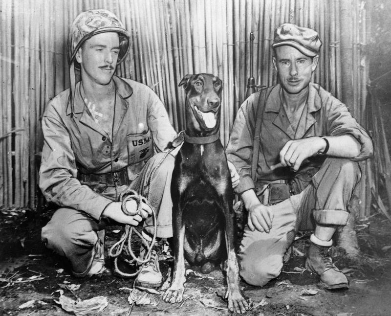 Doberman's in WW II