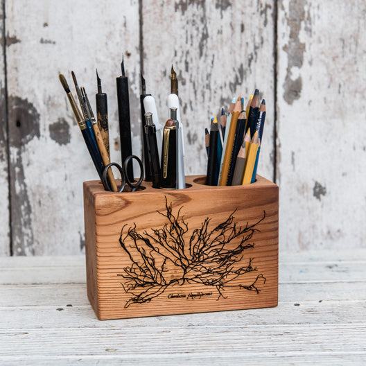Anna Atkins Medium Desk Caddy: Chordaria flagelliformis by Peg and Awl