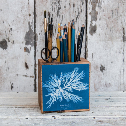 Anna Atkins Small Desk Caddy: Dictyota dichotoma by Peg and Awl