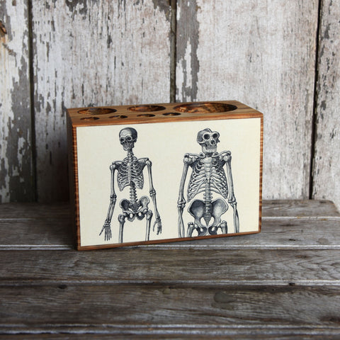 Medium Medical Desk Caddy: No. 1, Skeleton