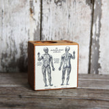 Small Medical Desk Caddy: No. 3, Muscular System