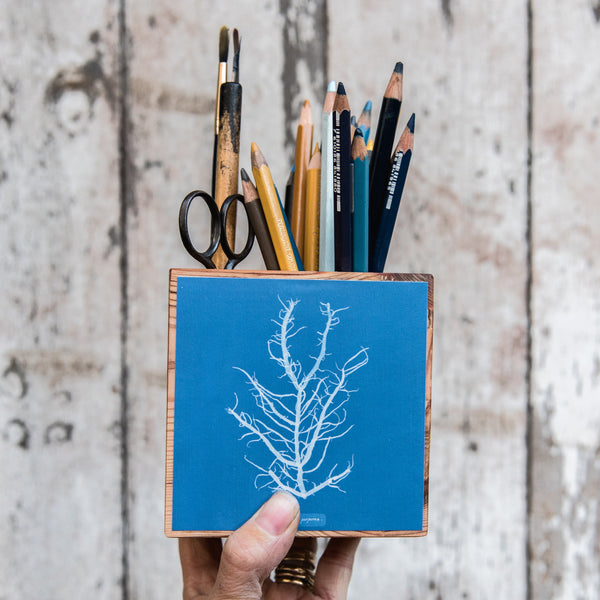 Anna Atkins Small Desk Caddy: Mesogloia purpurea