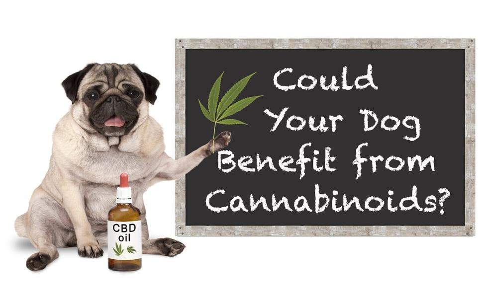 CBD for Dogs: Happy and Restful Canines
