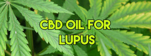 CBD for Lupus: What does the Research Say?