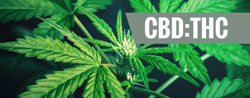 CBD to THC Ratio Explained: How to Maximize Benefits