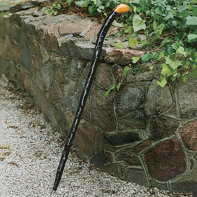 Blackthorn Walking Stick