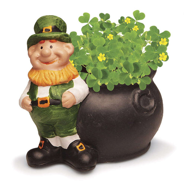 Grow Your Own Shamrocks