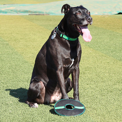 Eugene Emeralds Pet Squeaky Disc Toy