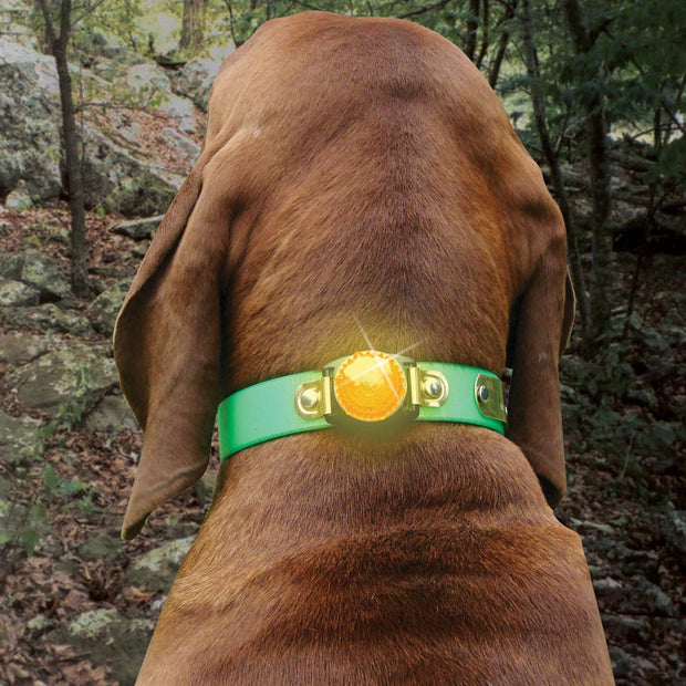 Nite Lite LED Collar Safety Light