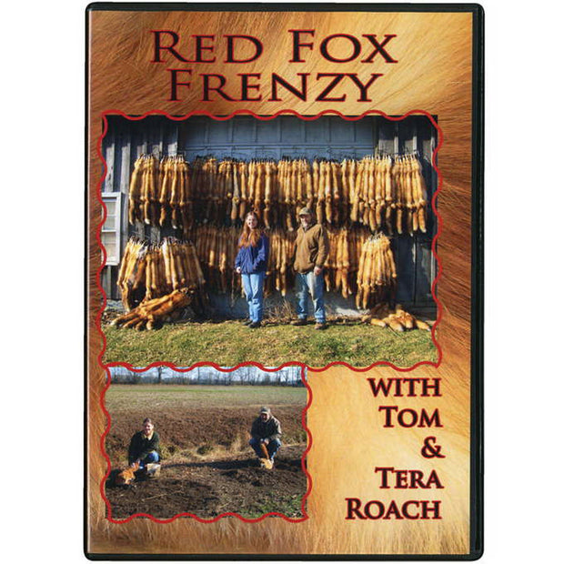 Red Fox Frenzy