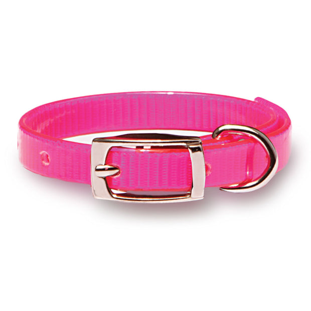 Day-Glo Puppy and Cat Collars