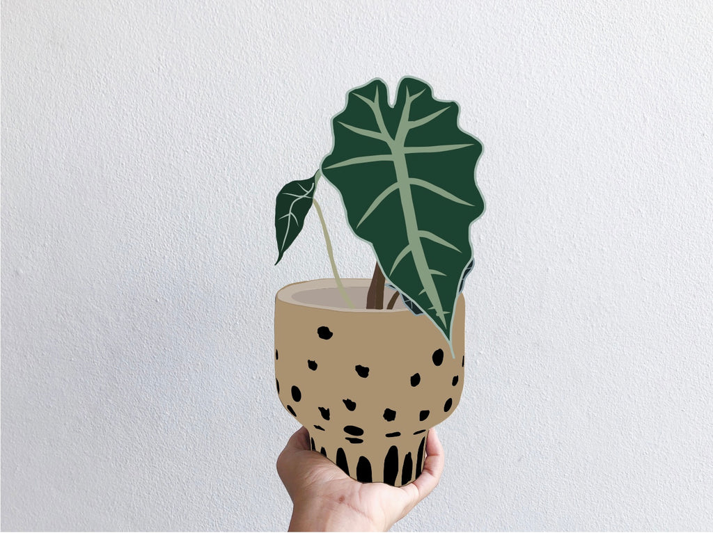 Alocasia Polly: Plant Care Tips