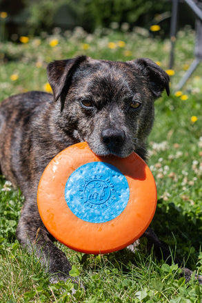 Planet Dog Zoom Flyer Disc (Frisbee)