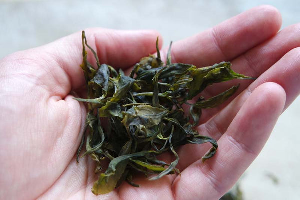 New Zealand grown tea