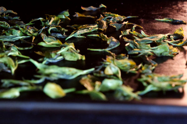 how to make tea drying leaves