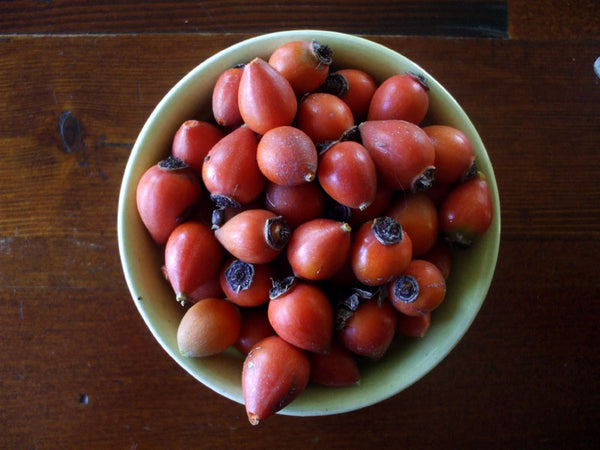collected rosehips in a bowl