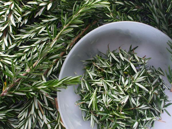 Organic rosemary stripped and ready to be dried