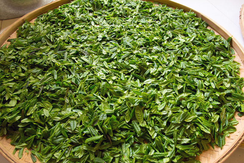 freshly picked green tea leaves