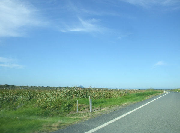 The road from Tauranga to Opotiki