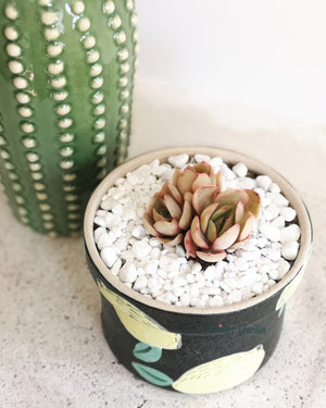 Load image into Gallery viewer, Echeveria Dalpina with Fruit Punch Lemon Pot