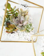 DIY Succulents Terrarium Kit - Geometric Cube