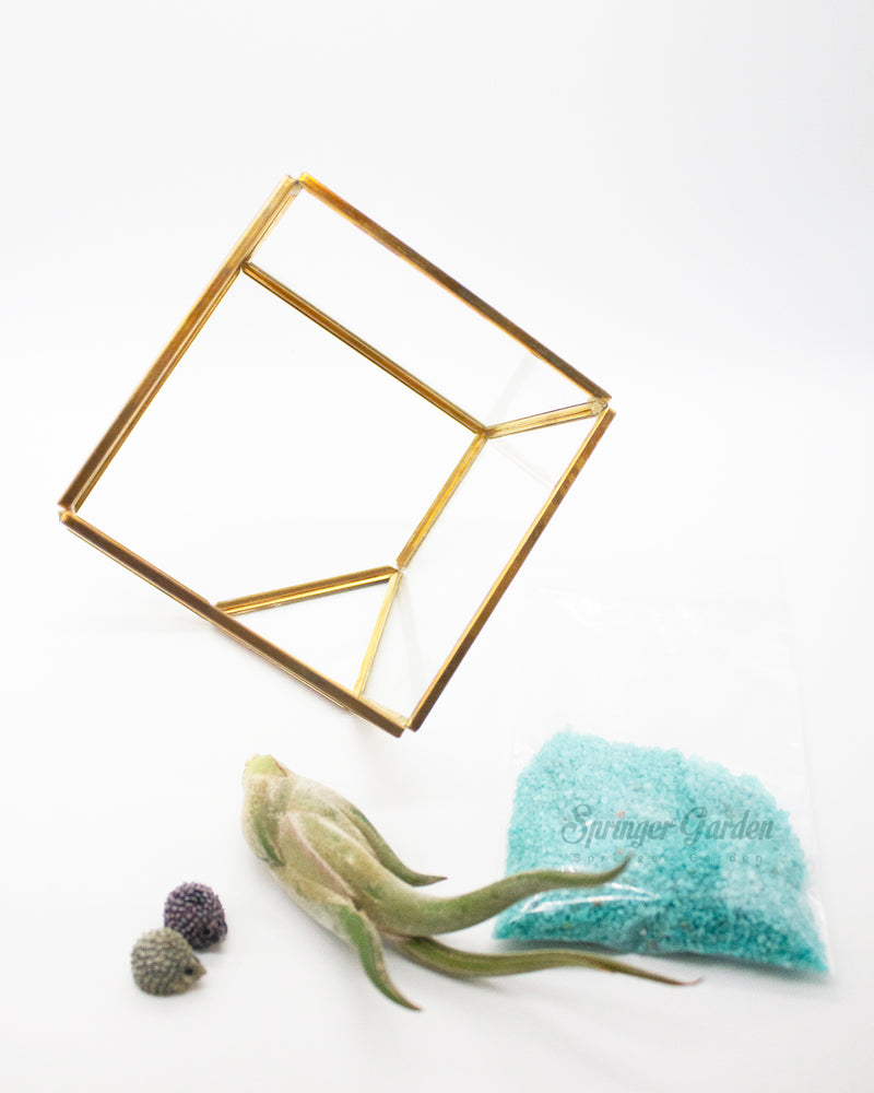 DIY Airplant Terrarium Kit - Geometric Cube