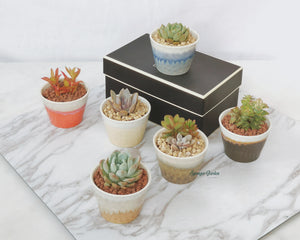 Jade Pot (Set of 6)
