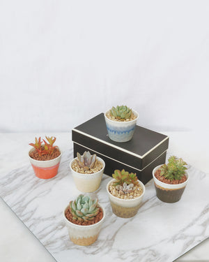 Load image into Gallery viewer, Planter + Plant(s) No.18
