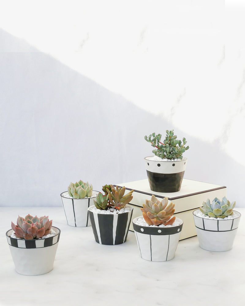 Load image into Gallery viewer, Planter + Plant(s) No.16