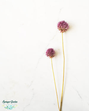 Load image into Gallery viewer, Allium