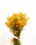 Waxflower / Bunch