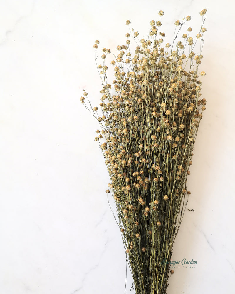 Load image into Gallery viewer, Yellow Flax / Bunch