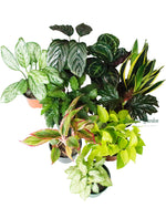 "Houseplant Wholesale 5""-8""Pot"