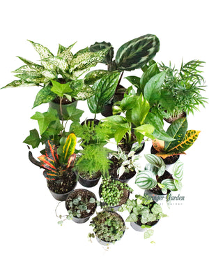 "Houseplant Wholesale 3""-4.5""Pot"