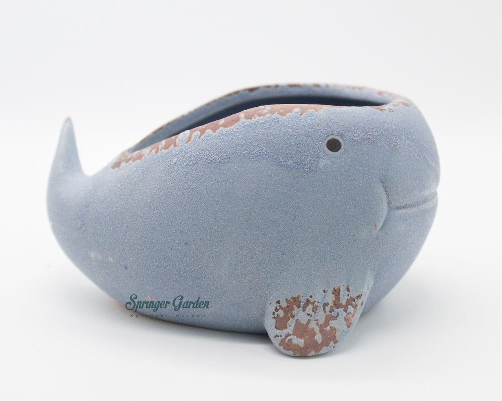 Whale Family (Set of 3)