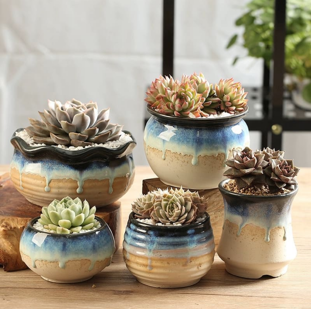 Succulent Planter/ Succulent Pot / Table Decor / Indoor Decor / Wedding Gift  Rare and unusual living succulents and cactus