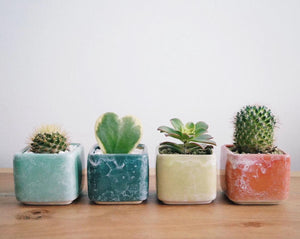 Load image into Gallery viewer, Restock Weekly - Cactus