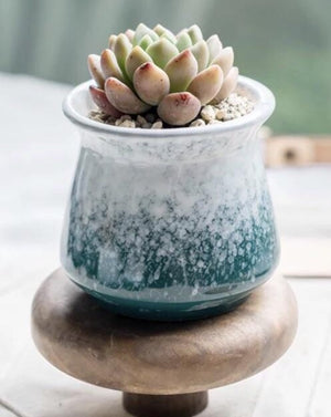 Small Ceramic Succulent Planter/ Succulent Pot / Table Decor / Indoor Decor / Wedding Gift