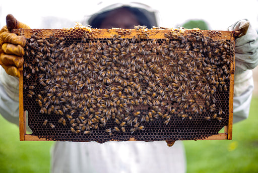 person holding out a part of a beehive