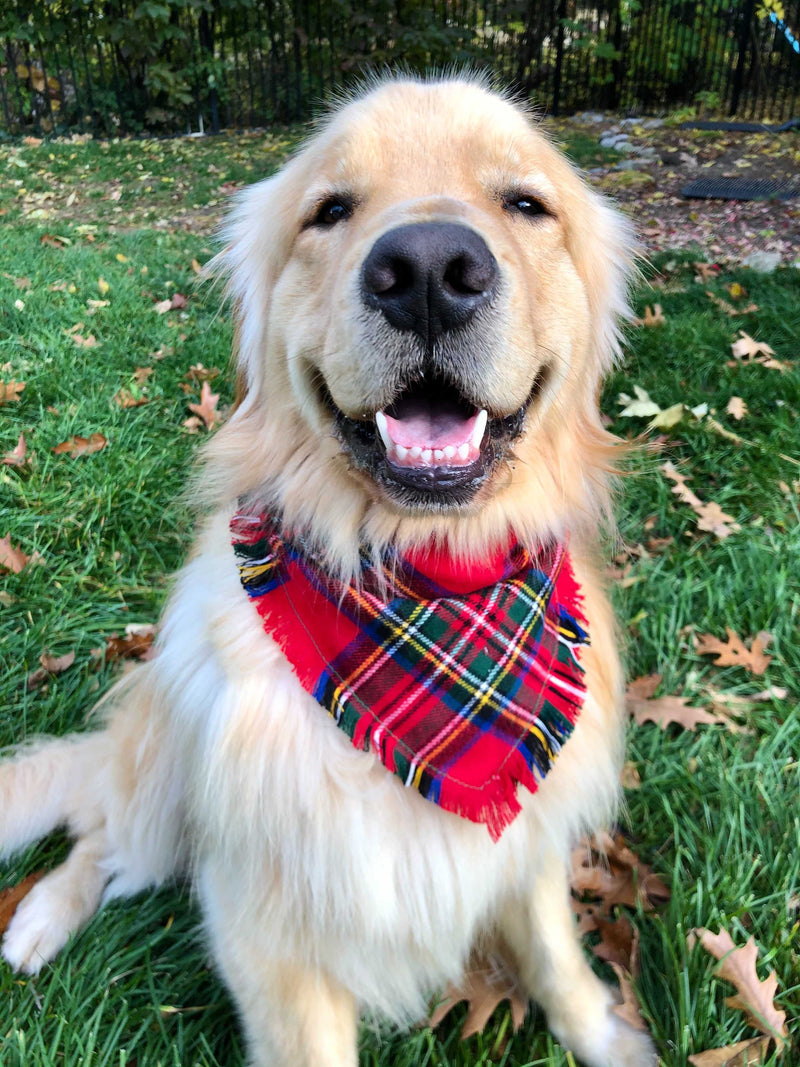 Bonfire Red Tartan Dog Bandana