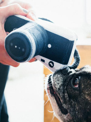Tourist Camera Dog Squeak Toy