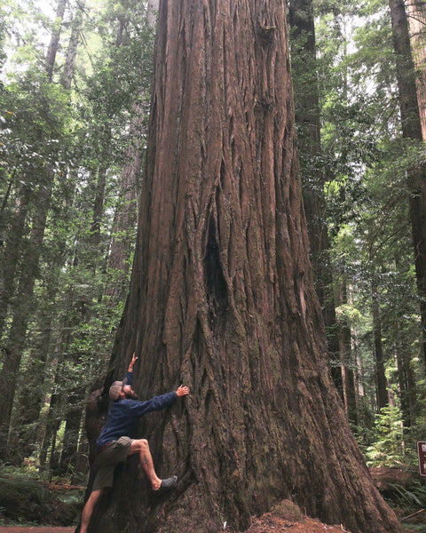 Among the mighty Redwoods, California, 2017