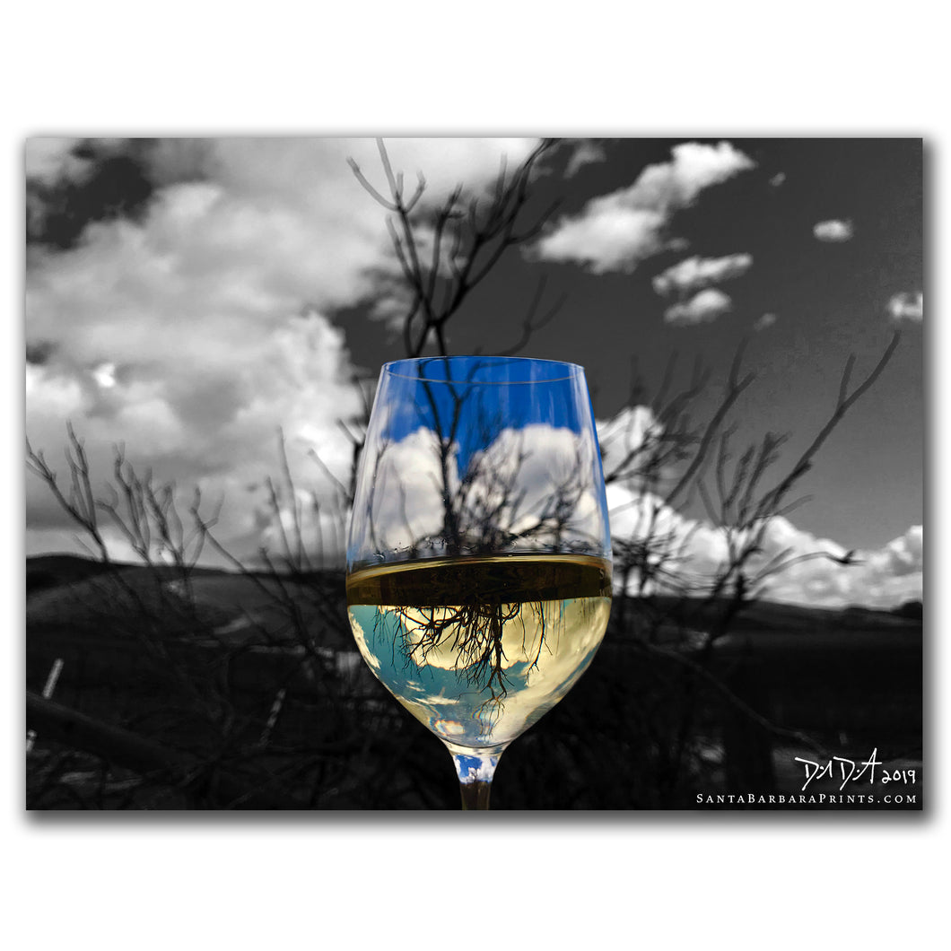 Wineglasses - 32, Santa Maria Valley