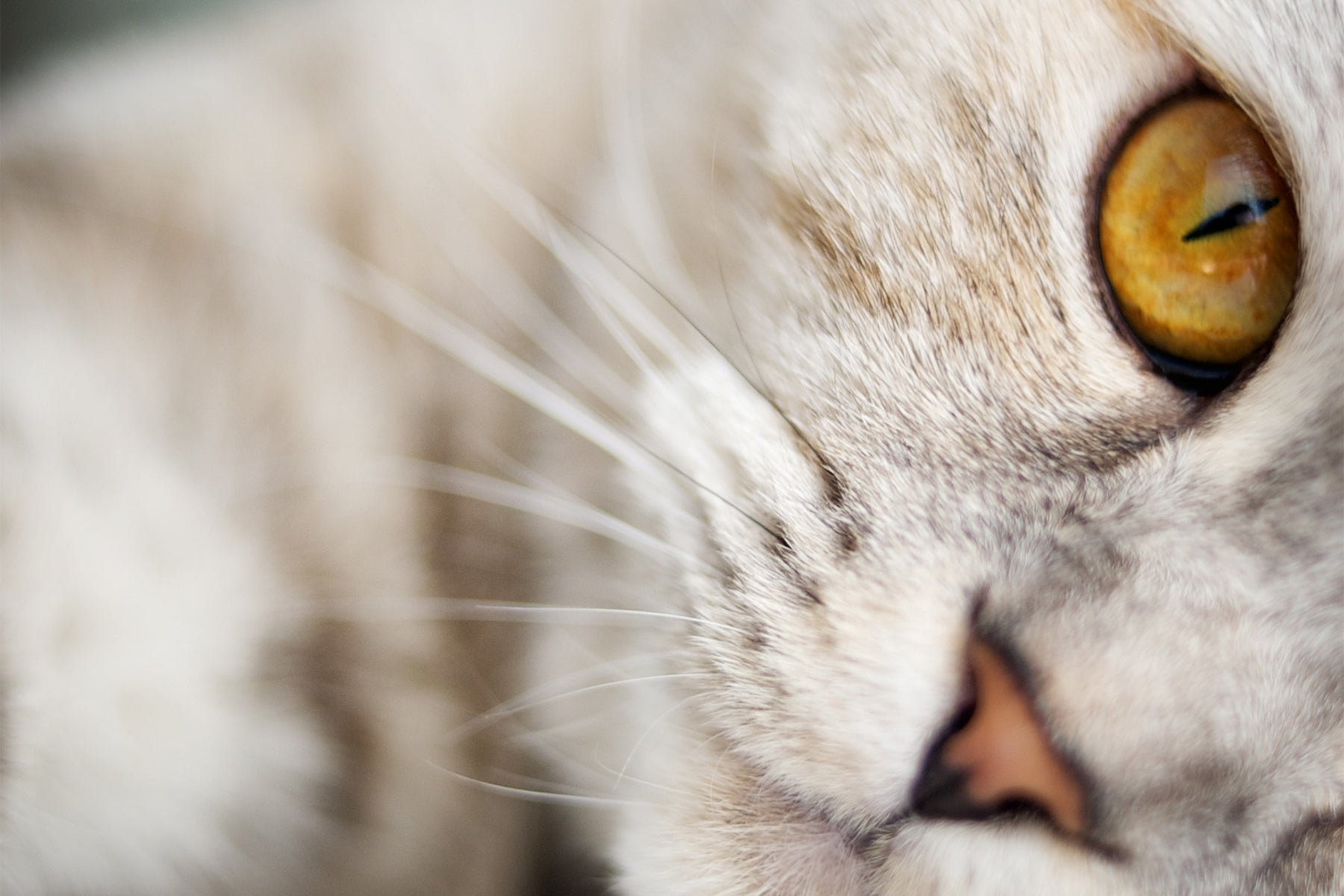 How CBD Can Help Cure Your Cat's Anxiety
