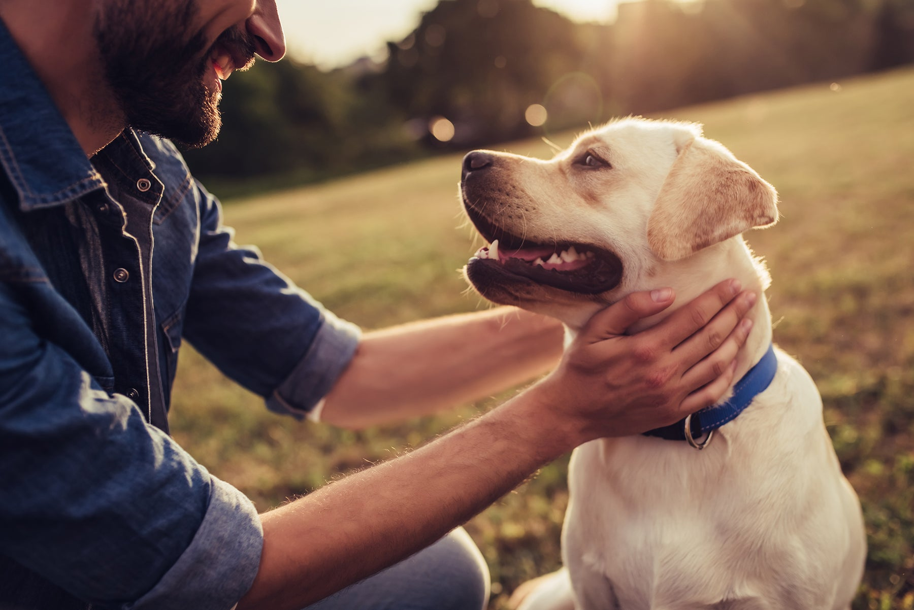 Here's Why CBD Could Help Your Dog with Pain Relief