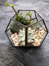 Load image into Gallery viewer, Dodecahedron Terrarium