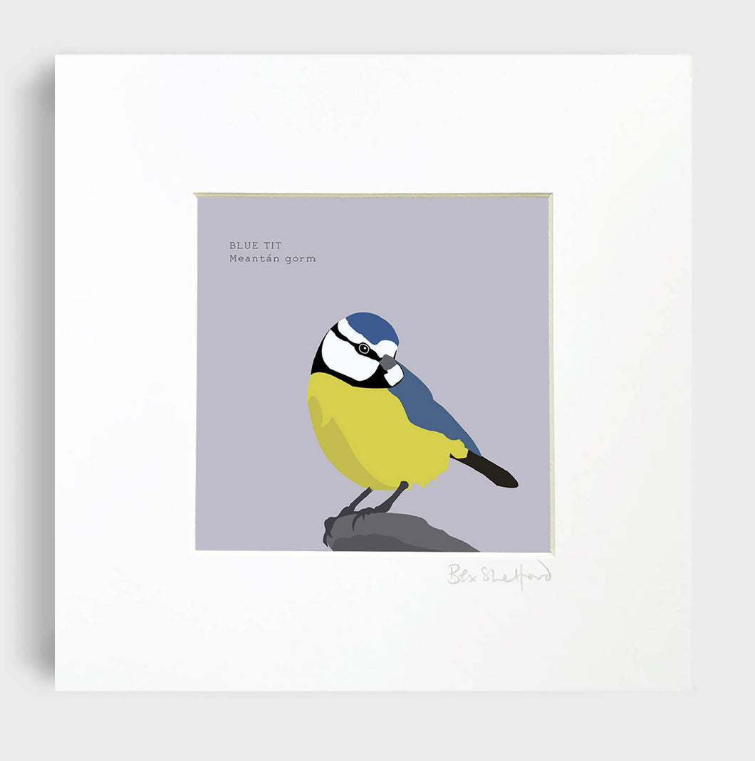 Blue Tit - Meantán Gorm Art Print