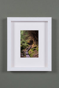 """Ballinstoe Wood"" - photographic print"
