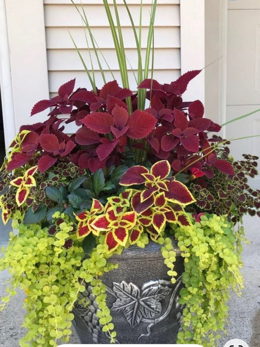 Deco Potted Mix Plants